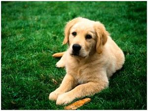 Десять заблуждений о здоровье собаки и уходе за ней