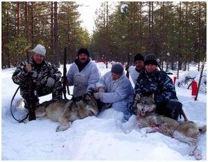 Подготовка облавной охоты и правила для охотников