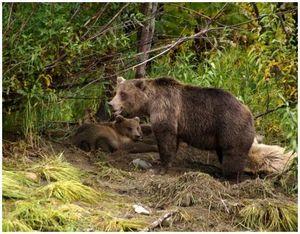 Старинное оружие для охоты на медведя