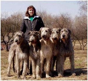 Десять самых распространенных мифов о собачьем поведении