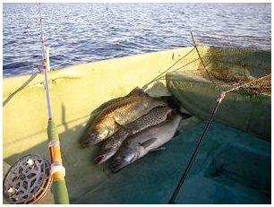 Для большой рыбы воблер Liberty bite 60