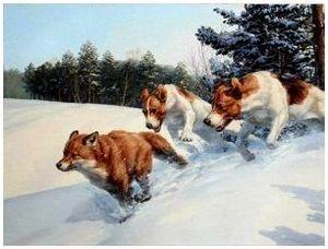 Охота с гончими собаками на лисиц