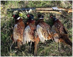 Как снять шкуру с зайца и ощипать фазана и куропатку?