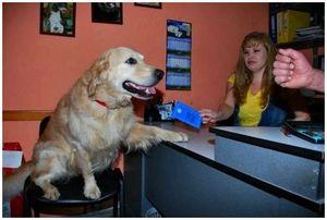 Необходимые прививки и ветеринарный паспорт для собаки