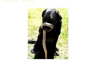 Если собаку на охоте укусила змея