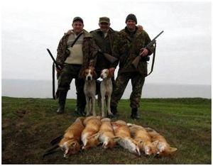 7 факторов удачной охоты