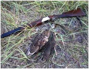Охотничье ружье марки МЦ 106-12