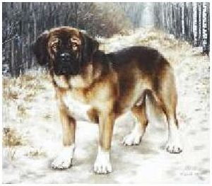 Редкие породы охотничьих собак