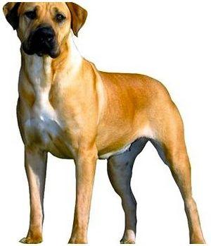 Отвлекающие факторы, влияющие на работоспособность охотничьей собаки