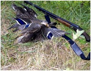 Весенняя охота по перу