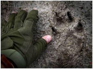 Следы животных: общая информация