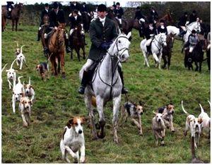 Выбор лошади для охоты