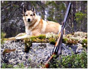 Лайка в истории охотничьего мастерства