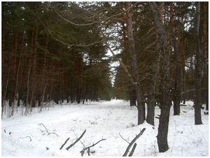 Охота в январе в Подмосковье