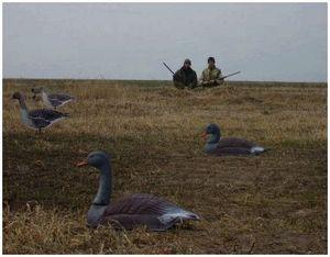 Охота на гусей с чучелами и профилями