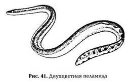 Животные, имеющие ядовитые органы для защиты и нападения: кишечнополостные