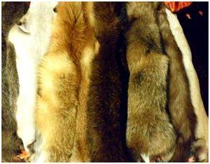 Обработка шкурок лисицы