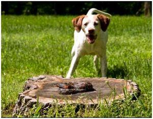 Первая ветеринарная помощь собаке