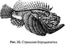 Животные, имеющие ядовитые органы для защиты и нападения: рыбы