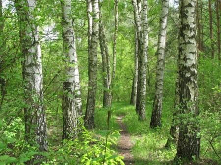Лес и здоровье человека