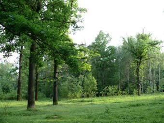 Почему леса бывают разными?