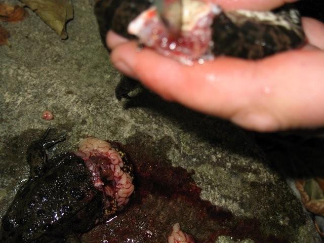 Как приготовить лягушку