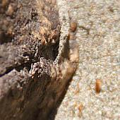 Trasa.Ru - Выберите камень: подойдет кремний, гранит, мрамор и другие твердые породы