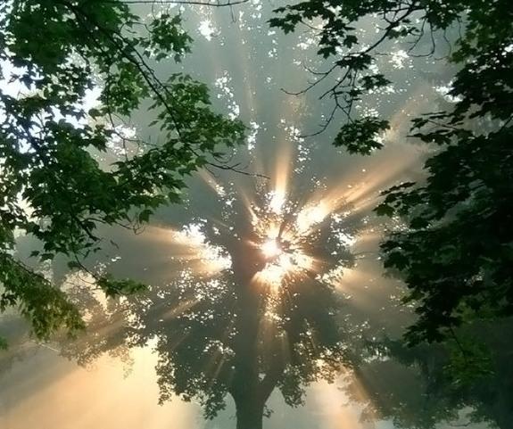 Свет и деревья
