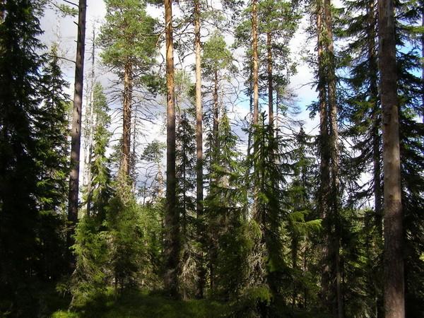 Леса нашей страны