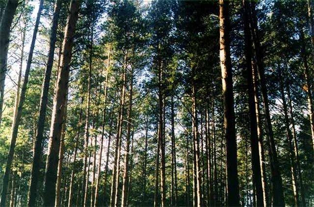 Лес и климат