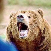Медведь нападает. Выживание в экстремальных условиях - Trasa.Ru