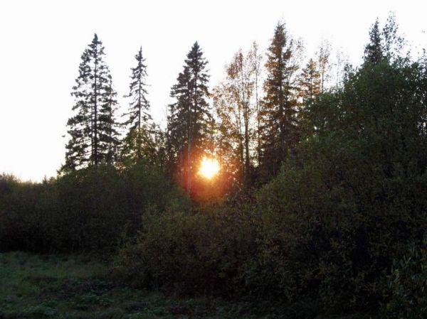 Солнце в тайге