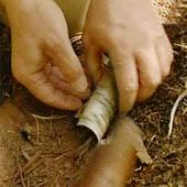 Trasa.Ru - Сверните в трубку бересту. Внутрь поместите сосновые иголки, тонкую бересту