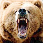 Как вести себя при встрече с медведем. Выживание в экстремальных условиях - Trasa.Ru