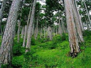 Какие деревья растут в наших лесах?