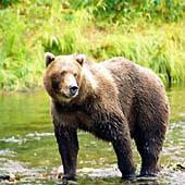 Встреча с медведем. Выживание в экстремальных условиях - Trasa.Ru