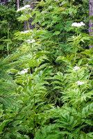 Какие растения помогут туристам и грибникам противостоять атакам  комаров?
